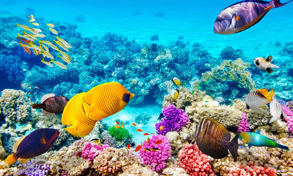 Химические фильтры оксибензон и октинокса попадая в воду пагубно сказываются на рыбах и коралловых рифах